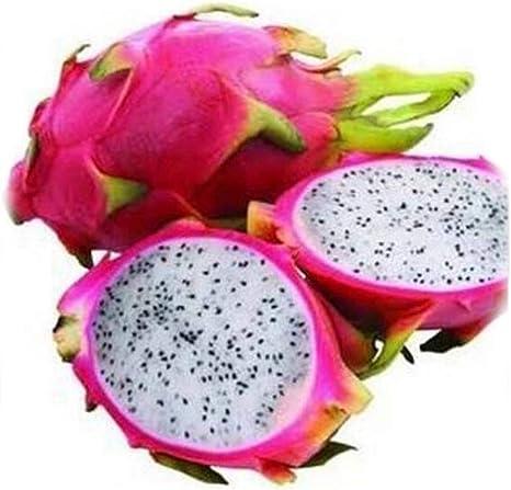 pitahaya  40 semillas PITAYA  AMARILLA  hylocereus Fruta GIGANTE DRAGON