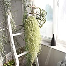 Compia Plastic Flower Decor 60cm Artificial Fake String Leaves Ivy Vine Plants Long Hanging Rattan Cane Garland