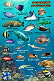 Philippines Reef Creatures Guide Franko Maps