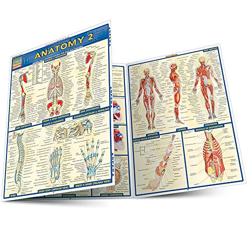Anatomy 2 (Quick Study Academic)