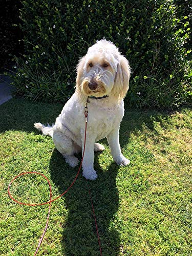 20ft Dog Tie Out Cable for Dogs, 16'' Chrome Plated Anti Rust Stake, Great for Camping or the Garden, Suitable for Harness, Leash & Chain Attachments - Petey's Pet Products (20ft) by Petey's Pet Products (Image #7)