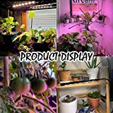 Grow Light for Indoor Plants - Upgraded Version 80