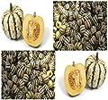 10 SWEET DUMPLING Squash seeds Winter ORANGE Sweet & Tasty colorful acorn shaped