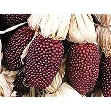 Mini Red Corn 'Red Strawberry' (Zea Mays) Vegetable Heirloom Popcorn Seeds, Rare