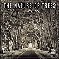 Nature of Trees, The — Photography by Paul Kozal 2017 Wall Calendar