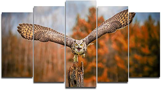 Great Grey Owl Flying 36x24 Gallery Wrapped Stretched Canvas