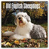 Old English Sheepdogs 2018 12 x 12 Inch Monthly Square Wall Calendar, Animals Dog Breeds (Multilingual Edition)