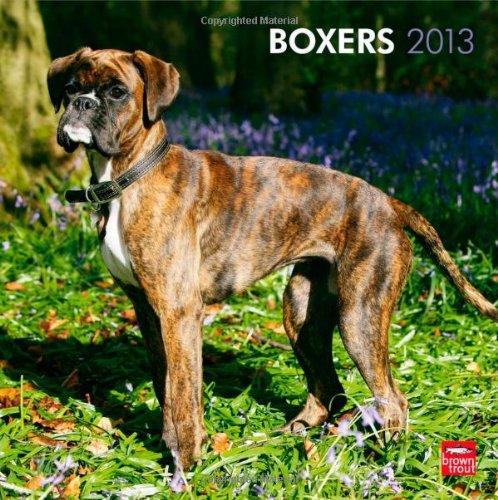boxers-2013-international-original-browntrout-kalender