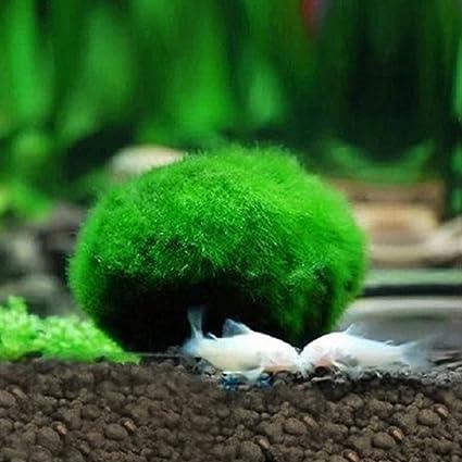 Hemore - Bolas de Algas Artificiales para decoración de Acuario para pecera, Adorno para Mascotas