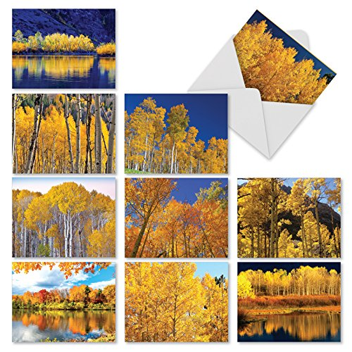 M1729BN Golden Foliage: 10 Assorted Blank All-Occasion Note Cards Features Autumn's Golden Glory of Leaves, w/White Envelopes.
