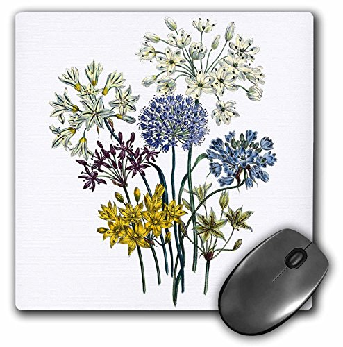 Collection Allium - 3dRose BLN Vintage Flower Collection - Allium with White, Blue Lavender, Purple and Yellow Flowers - MousePad (mp_153221_1)