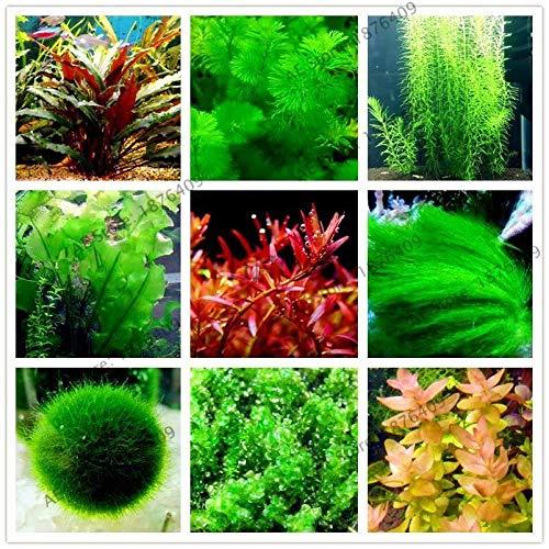 1000pcs/bag Mix Aquarium Plants Seed Grass Water Aquatic Plant Seeds for Home gar (Aquarium Seeds Plant)