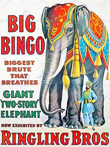 Circus Poster - CIRCUS ELEPHANT BIG BINGO RINGLING BROS BRUTE GIANT USA ART PRINT POSTER BB7703