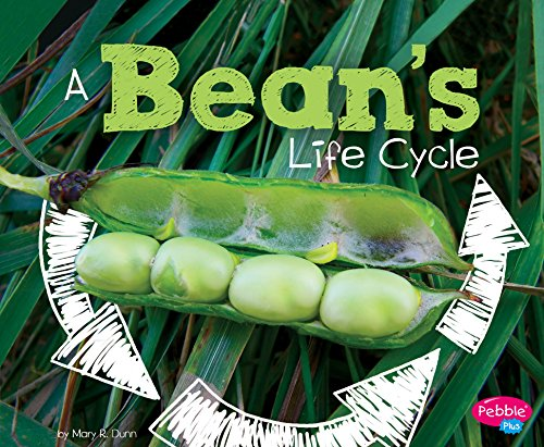 A Bean's Life Cycle (Explore Life Cycles)