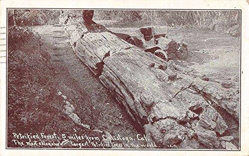 Calistoga California Petrified Forest Car next to Log Antique Postcard J70271 (Postcard Log)