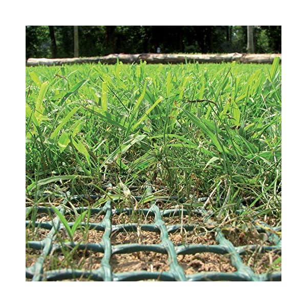 Rete Salvaprato Tenax Tr, Impedisce al Cane di Scavare Buche in Giardino, Verde, 1x5 m 3 spesavip