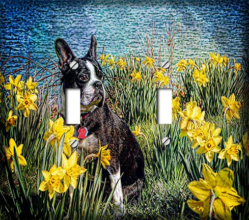 Boston Terrier in Daffodils Double Toggle Switchplate - Switch Plate Cover