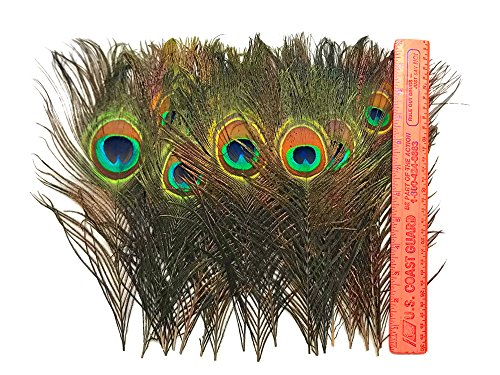 (Moonlight Feather | 100 Pieces - Natural Peacock Tail Feathers Wholesale Supplier for Costume, Halloween, Carnival, Wedding)