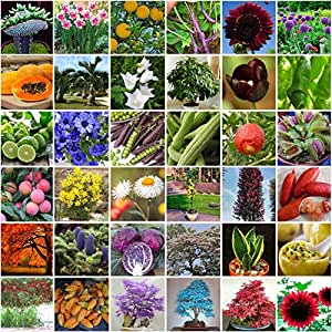 12-30pcs : Fruit Vegetables Flower Seeds Garden Tree Outdoor Fruit Indoor Rare Seed