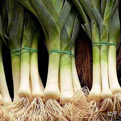 MelysUS Garden-Evergreen Bunching Onion Seeds Long Green Scallion Seeds for Planting, Non-GMO Organic Heirloom Scallion Seeds Chives Seeds Vegetables : Garden & Outdoor