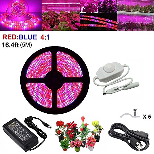 All Blue Led Grow Light in Florida - 4