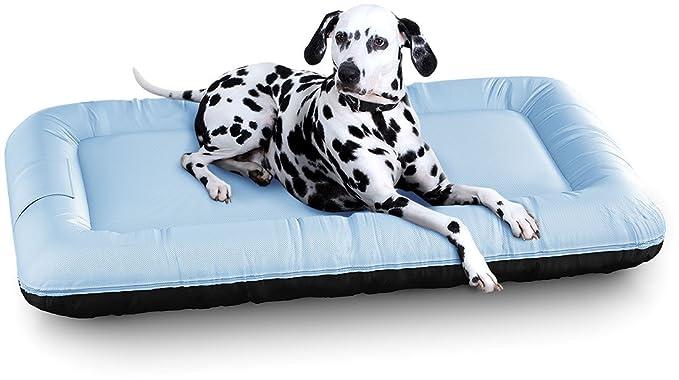 Knuffelwuff XXL - Cama para Perro (120 x 85 cm), Color Beige: Amazon.es: Productos para mascotas