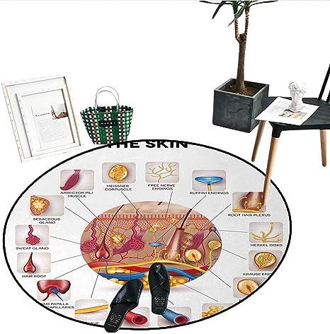 Alfombra Redonda educativa Antideslizante con diseño Simple de fotosíntesis para Plantas, moléculas de Sol, Crecimiento de Cadena química, ecología, Interior/Exterior, Redonda, 61 cm de diámetro: Amazon.es: Hogar