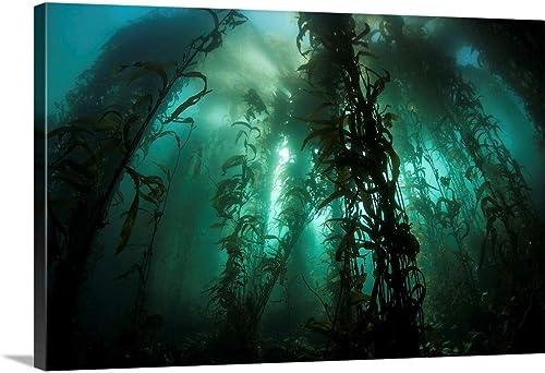 GREATBIGCANVAS Giant kelp Macrocystis pyrifera Grows Canvas Wall Art Print