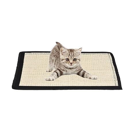 griffoir chat sol