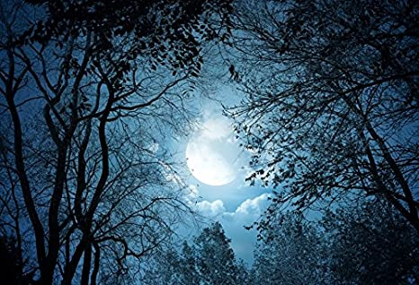 Yeele 10x8ft Forest Night View Backdrop Night Sky Moon Moonlight Tree P Ography Background Pictures Baby Girl