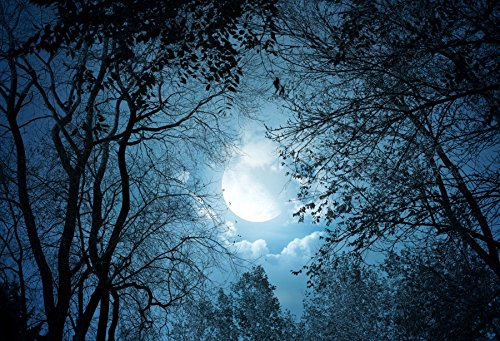 (Yeele 10x8ft Forest Night View Backdrop Night Sky Moon Moonlight Tree Photography Background Pictures Baby Girl Boy Adult Portrait Photo Booth Vinyl Wallpaper Photocall Studio)