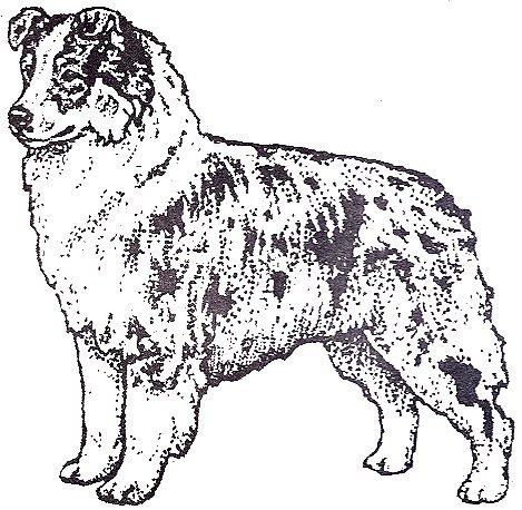 Dog Rubber Stamps - Australian Shepherd-1F Size: 2-1/4
