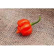 Moruga Variant Trinidad Scorpion Heirloom Pepper Premium 50+ Seed Packet