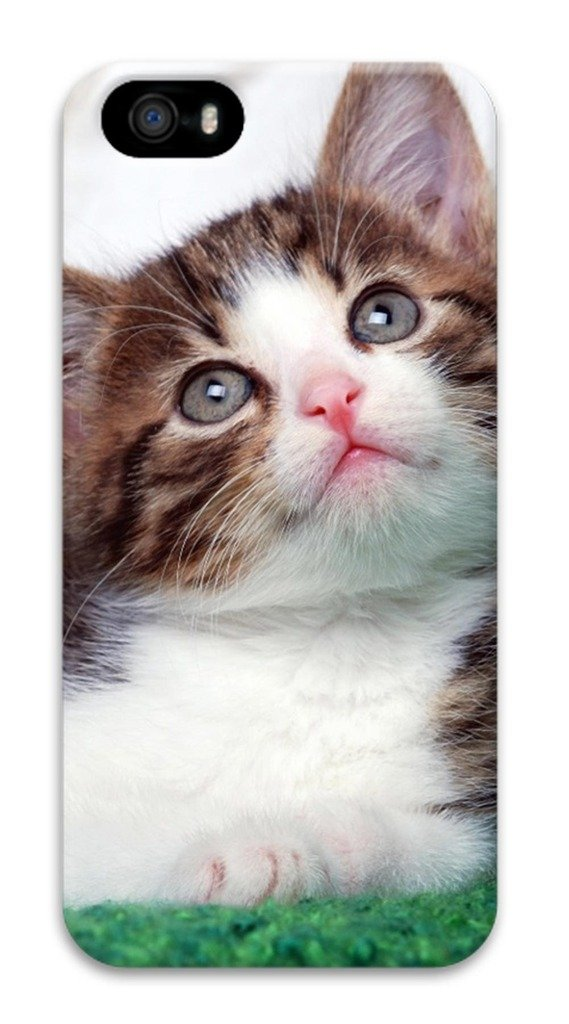 3D Surrounded All Printed Case For iPhone 5S Technology Apply To 4.0 Inch Hard case non-slip case Hard iPhone Case Colored case Easy To Operate Cute Cat Lovely