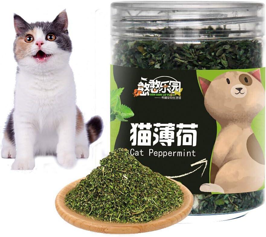 Chuanglan Premium - Punta de Gato para Rellenar Juguetes de Gato Que Aumentan la Aptitud de los Gatos, 20 g: Amazon.es: Productos para mascotas