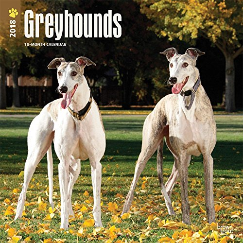 Greyhounds 2018 Monthly Square Wall Calendar