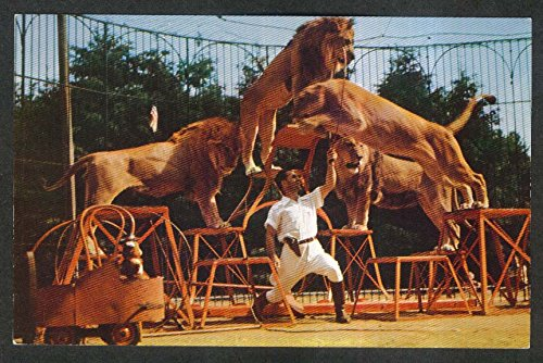 Lion Tamer Act Benson Wild Animal Farm Hudson Centre NH postcard 1950s from The Jumping Frog