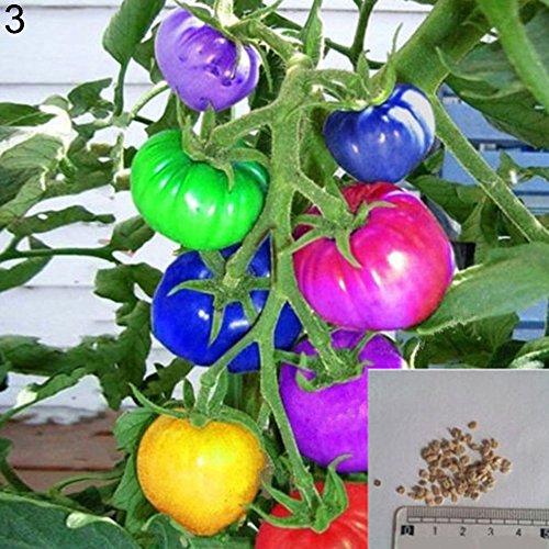 (200Pcs Rainbow Tomato Seeds Garden Organic Fruit Vegetable Plant Home Yard Decor)