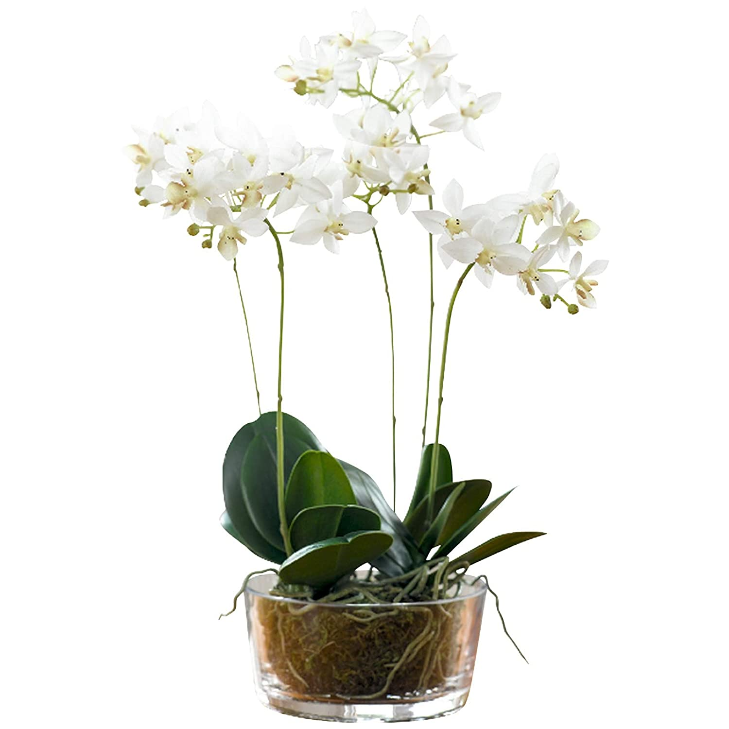 6 New Stems Deluxe Quality Cream Phelenopsis Artificial Silk Flowers Stunning!