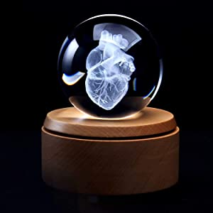XINDAM 3D Human Heart Anatomical Model Paperweight(Laser Etched) in Crystal Glass Ball Science Gift (Included LED Base)