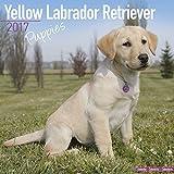 Lab Puppies Calendar - Yellow Labrador Retriever Puppies - Dog Breed Calendars - 2016 - 2017 wall calendars - 16 Month Calendar by Avonside