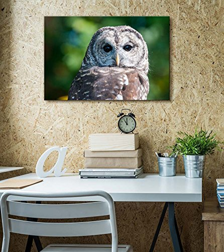 Barred Owl on Green Background