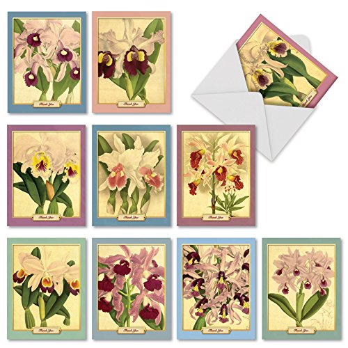 """M10038BK Vintage Orchids: 10 Assorted Blank """"Thank You"""" Note Cards With Lovely Vintage Illustrations Of Orchids with White Envelopes."""