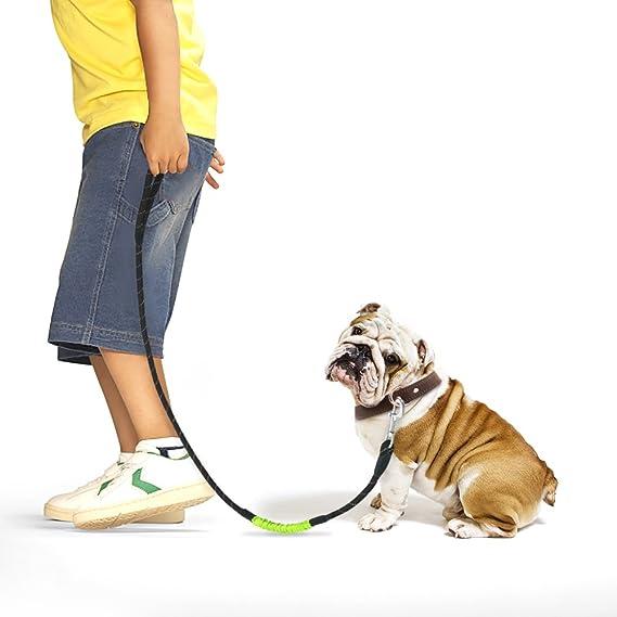 Cuerda de perro de cuerda con fuerte correa de nylon redonda y banda telescópica de Bungee: Amazon.es: Productos para mascotas