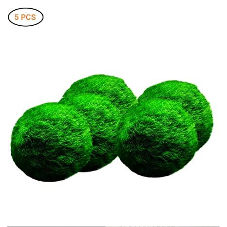 Luffy Marimo Moss Balls Small Nano Aquarium Ball Set Of 5 Decor For