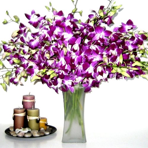 Fresh Flowers - 20 Purple Dendrobium Orchids with Vase by Just Orchids