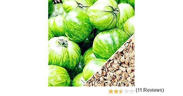 FastDirect Semillas de Tomate Verde 100 PCS Semillas de Verduras ...