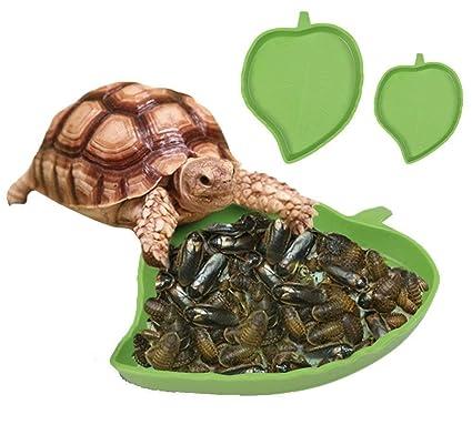 Amazon Com Wangdafang Pet Aquarium Leaf Reptile Food And Water
