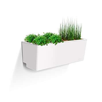 Amazon Com Glowpear Urban Garden Self Watering Mini Wall Planter
