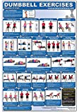 Dumbbell Exercises-Shoulders & Arms Laminated (Poster)